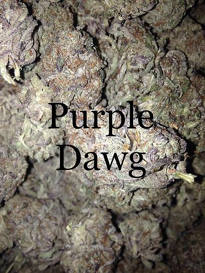 PURPLE DAWG