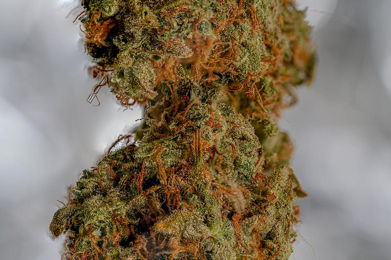 Zkittlez Organic Grown - Indica - NEW VENDOR OFFER