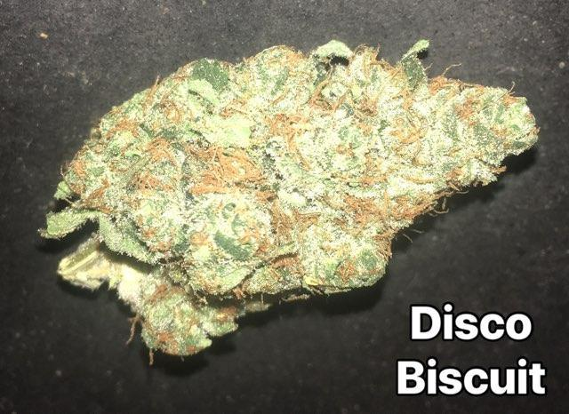 DISCO BISCUIT A++