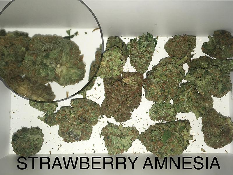 STRAWBERRY AMNESIA GRADE A+