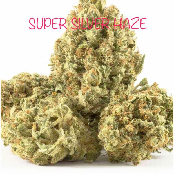 SUPER SILVER HAZE (DUTCH)